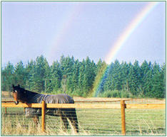 Nodaway Farm, retirement, layup and vacation care for horses in Sequim, Washington on the Olympic Peninsula